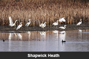 Shapwick Heath