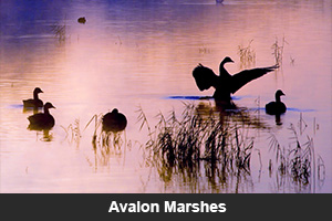 Avalon Marshes