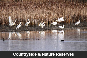 Countryside & Nature Reserves