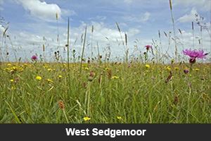 West Sedgemoor