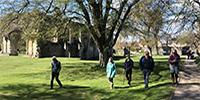 Tree Walk & Talk @ Glastonbury Abbey